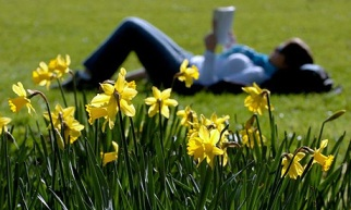 reading and daffodils