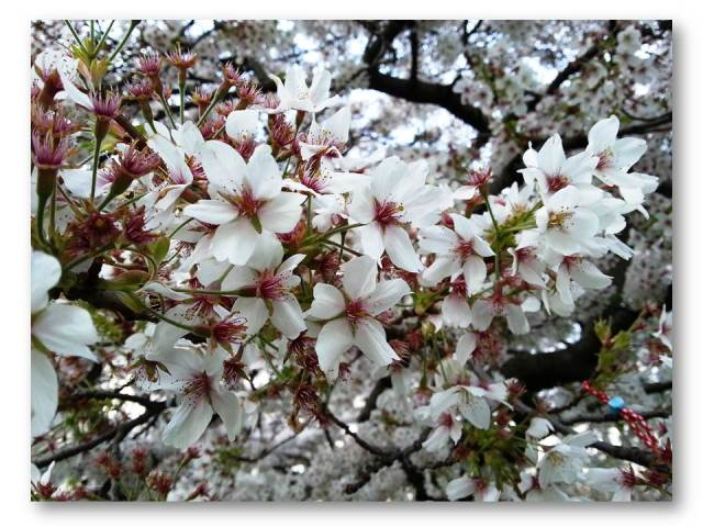 Spring satori