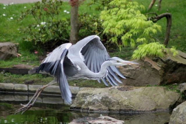 Heron [4]