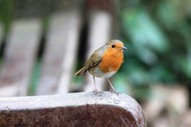Robin [1]