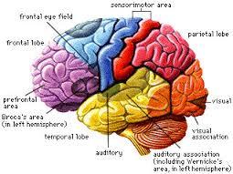 brain [1]