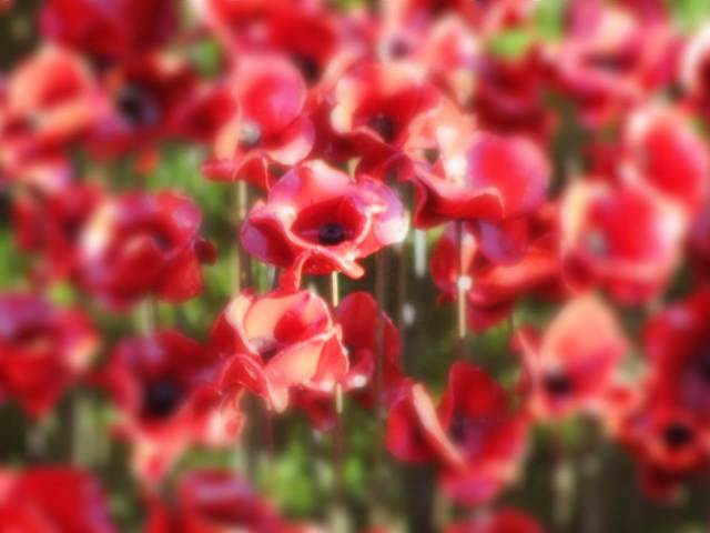 Blurred poppies 1