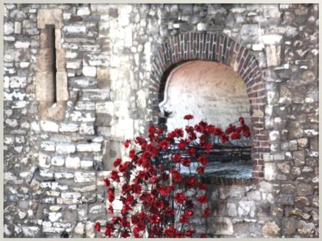 Window of poppies