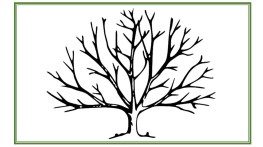 Blank Tree