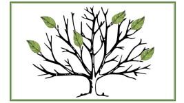 EY tree