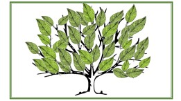 HE tree