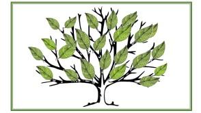 Schools tree